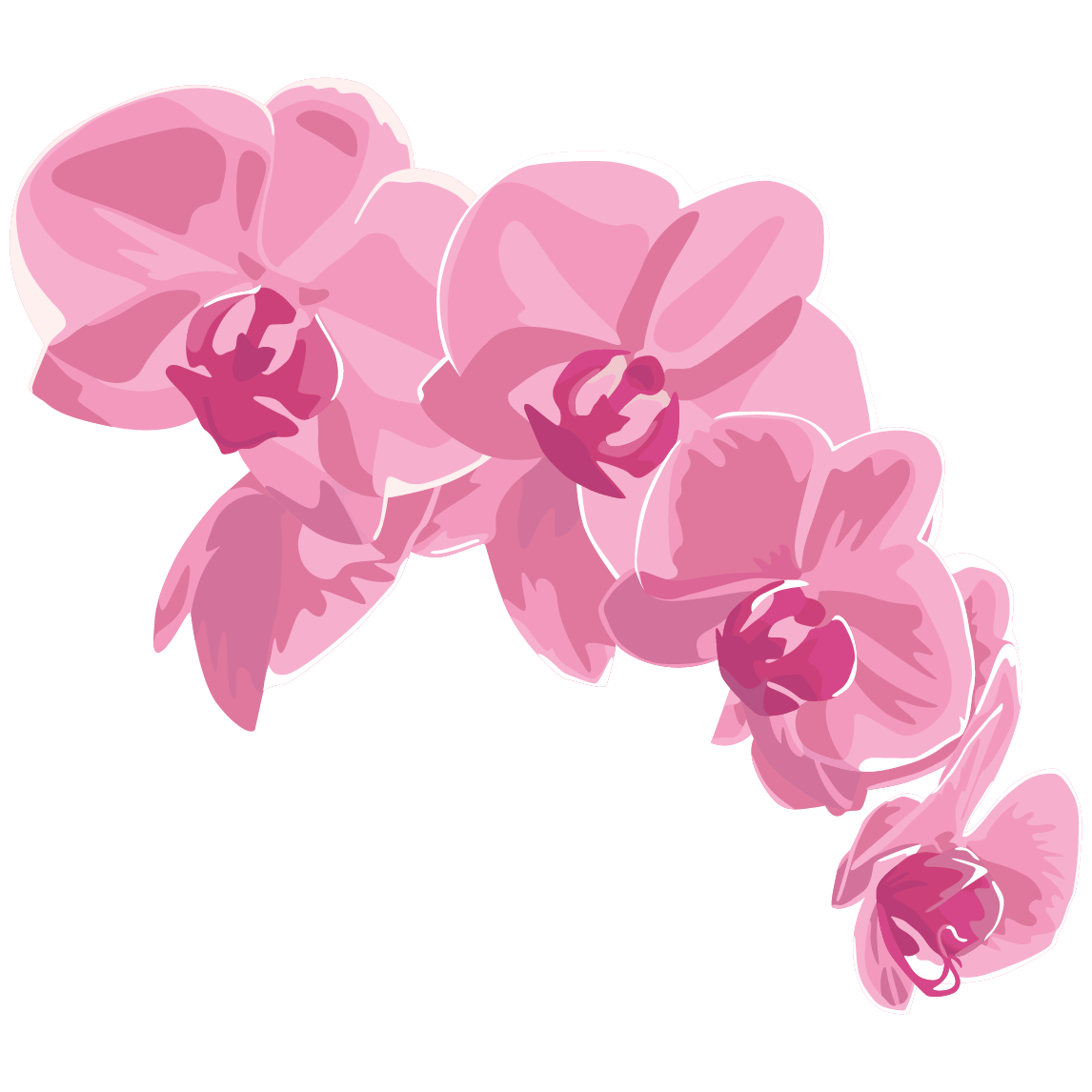 Pink orchid illustration