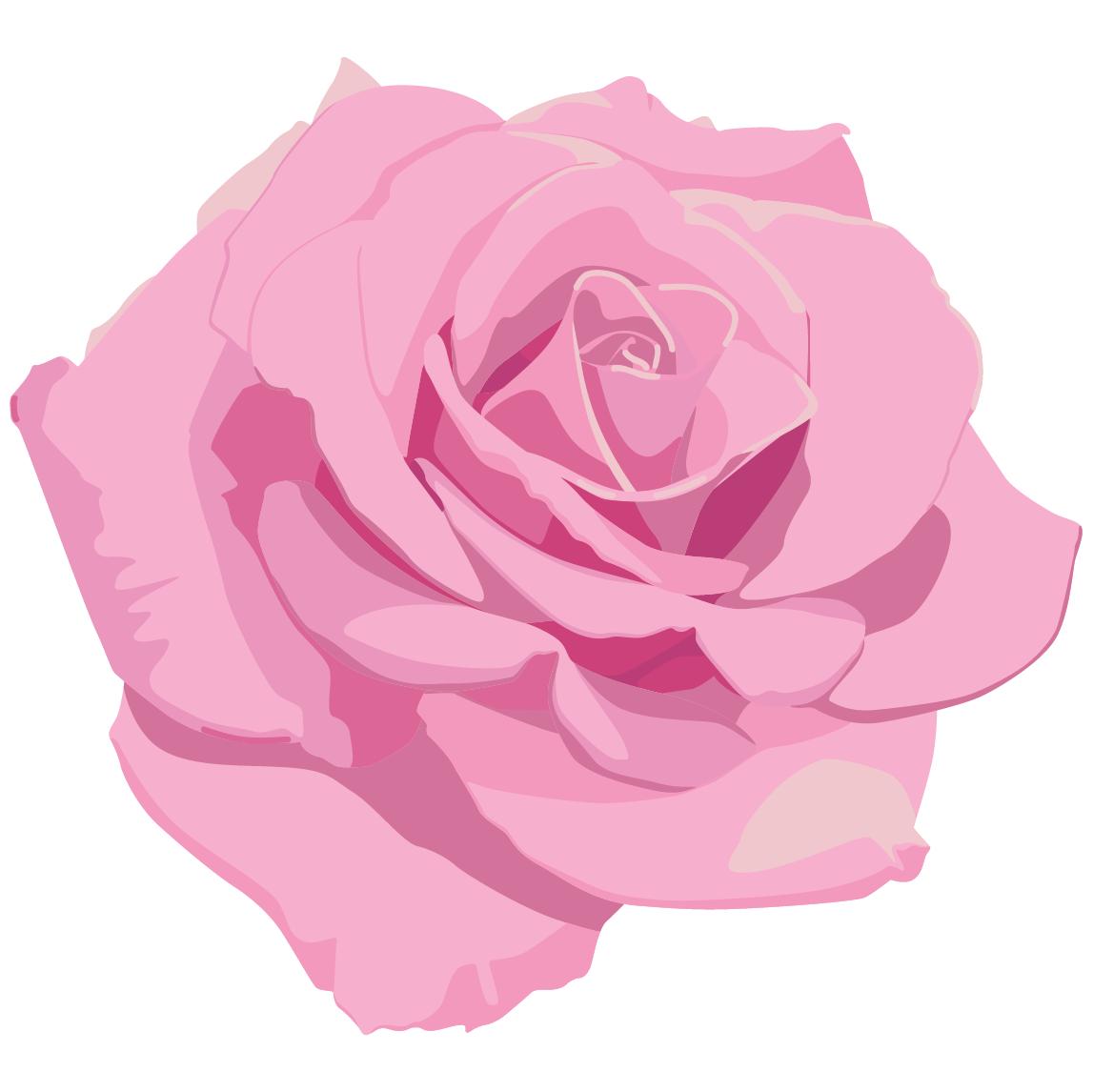 Pink rose illustration